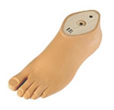 1G6轻型美容脚(下肢假肢)